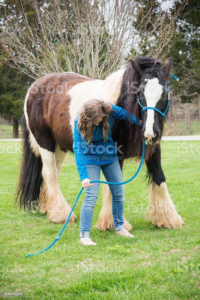 Girl looks at a horse's oversized feathery hooves stock photo