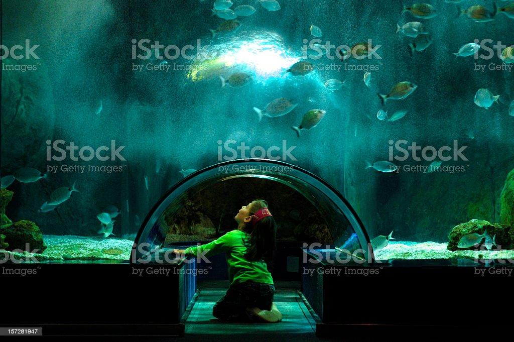 girl looks at the fish in a big aquarium stock photo
