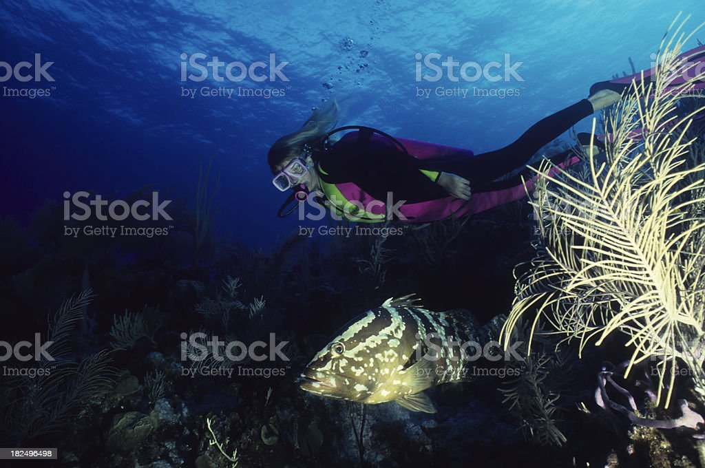 Girl Meets Grouper royalty-free stock photo