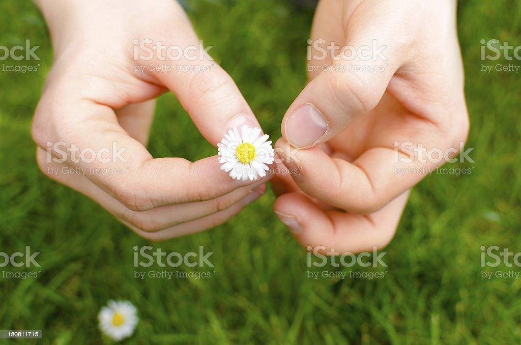 Girl picking daisies stock photo