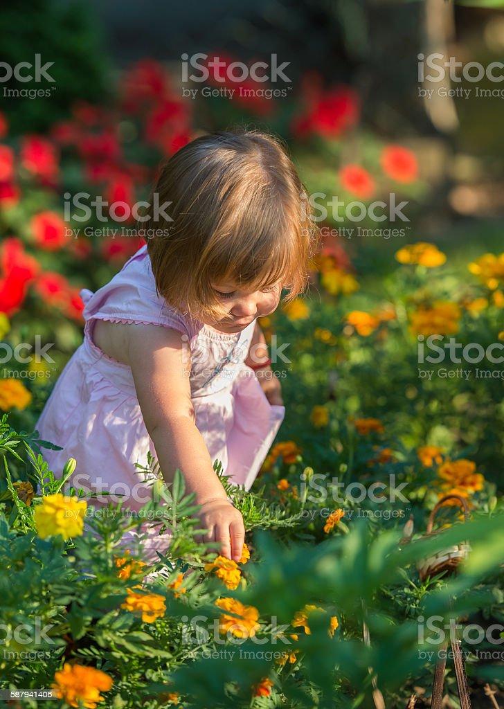 Girl picking flowers stock photo