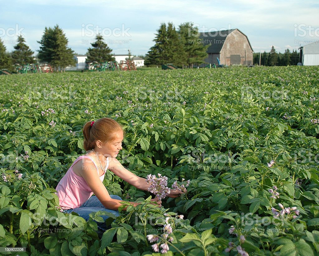 Girl Picking Potato Blossoms on Farm royalty-free stock photo