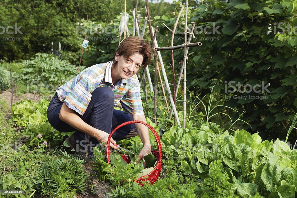 girl picking the vegetables royalty-free stock photo