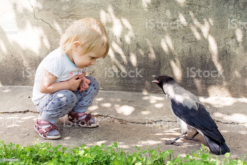 girl playing with a hooded crow stock photo