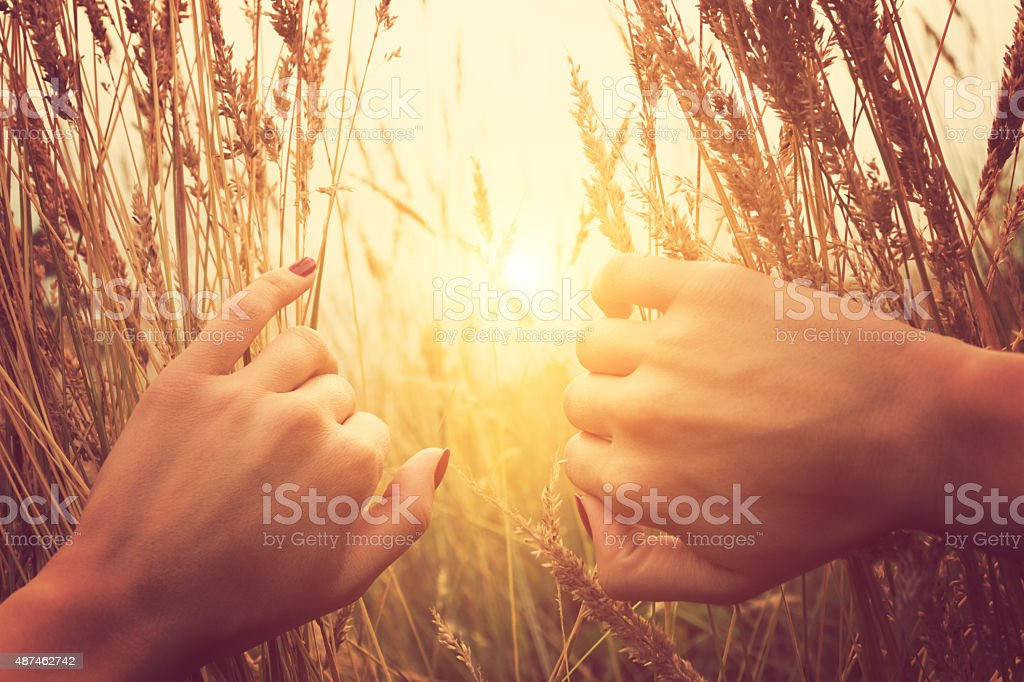 Girl relaxing in a wheat-field. stock photo