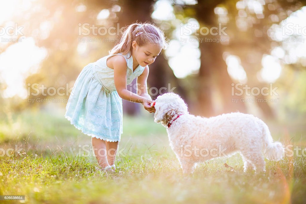 Girl sharing watermelon with her cute dog stock photo