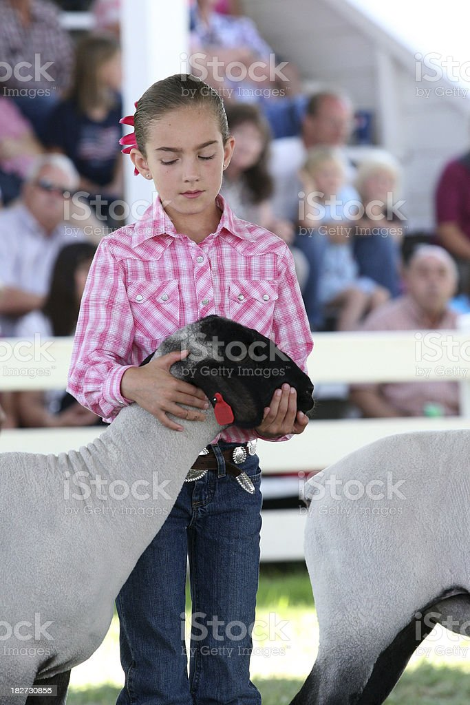 Girl Showing her Lamb at the County Fair royalty-free stock photo
