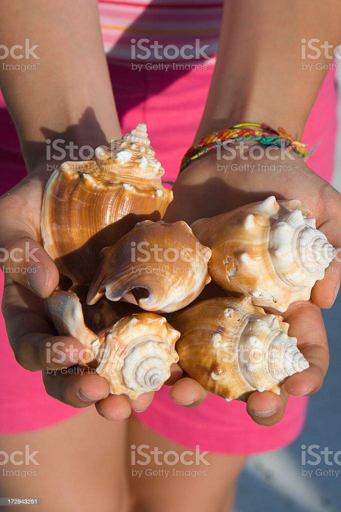 Girl shows sea shells at beach stock photo