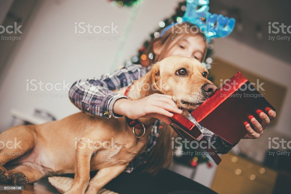 Girl sitting with her dog and opening christmas gift stock photo