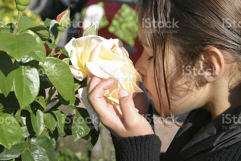 girl smelling a rose royalty-free stock photo