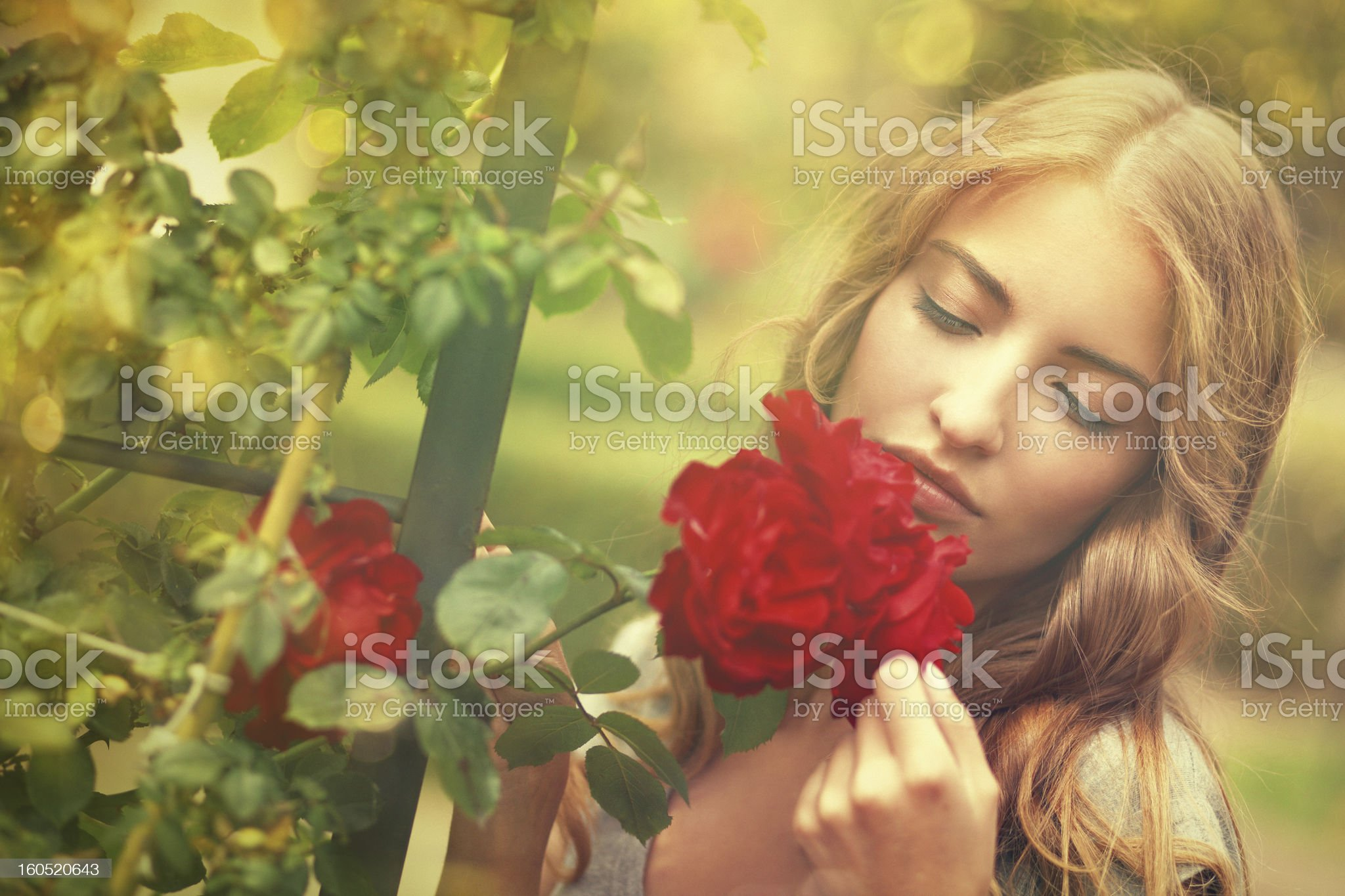 girl smelling roses royalty-free stock photo