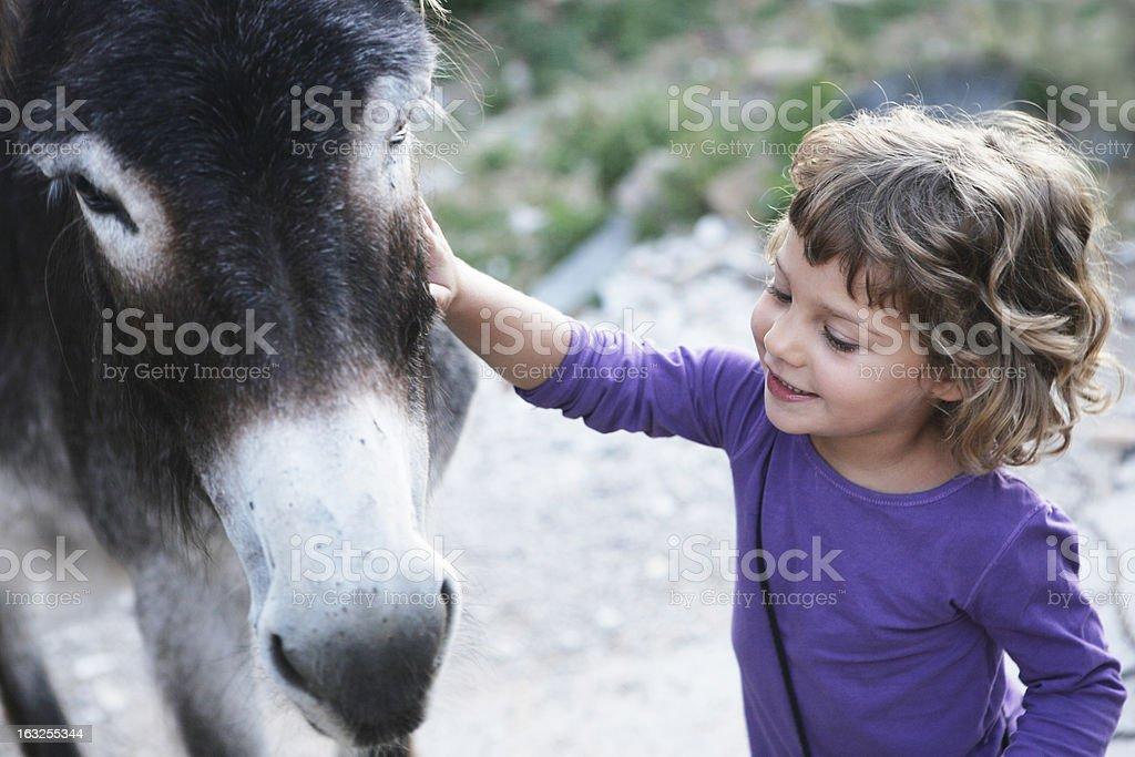 girl smiling petting to donkey stock photo