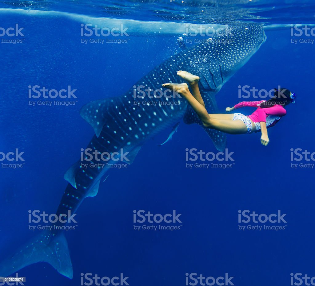 Girl snorkeling with whale shark stock photo