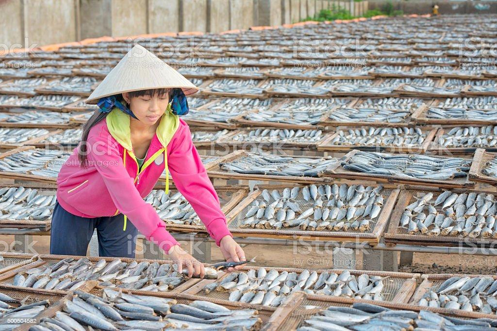 Girl Sorting Prepared Sardines for Sun-Drying stock photo