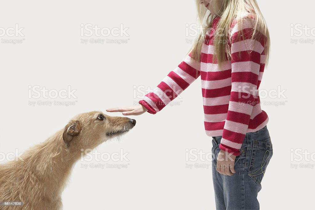 Girl stroking lurcher stock photo