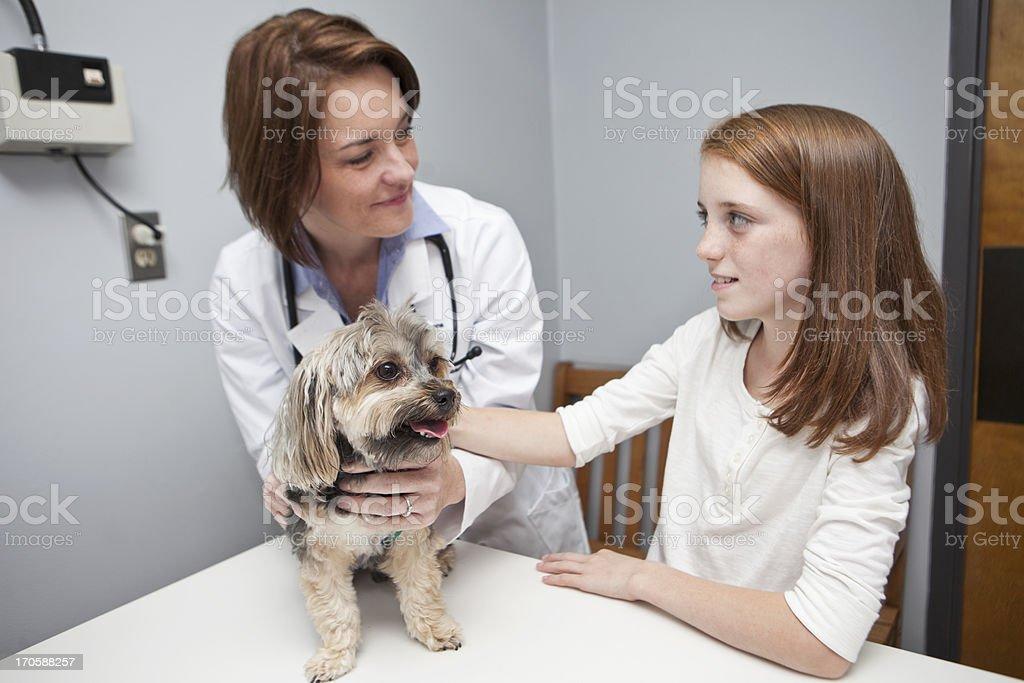 Girl taking pet dog to vet royalty-free stock photo
