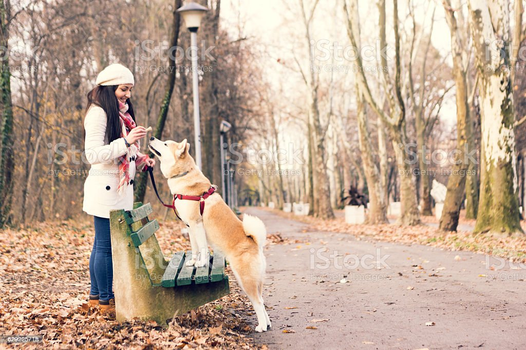 Girl taking walk with her dog stock photo