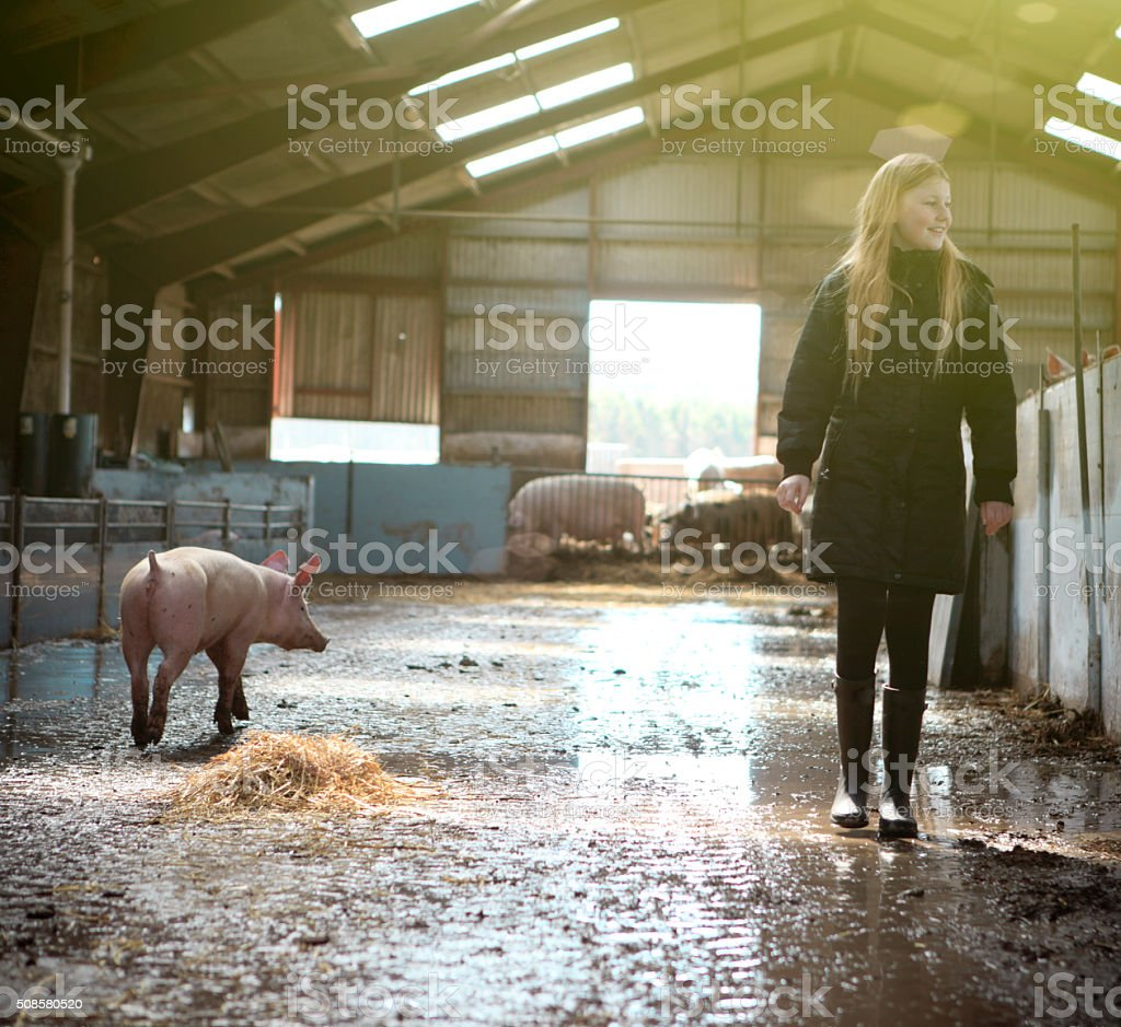 Girl visiting organic pig farm. stock photo