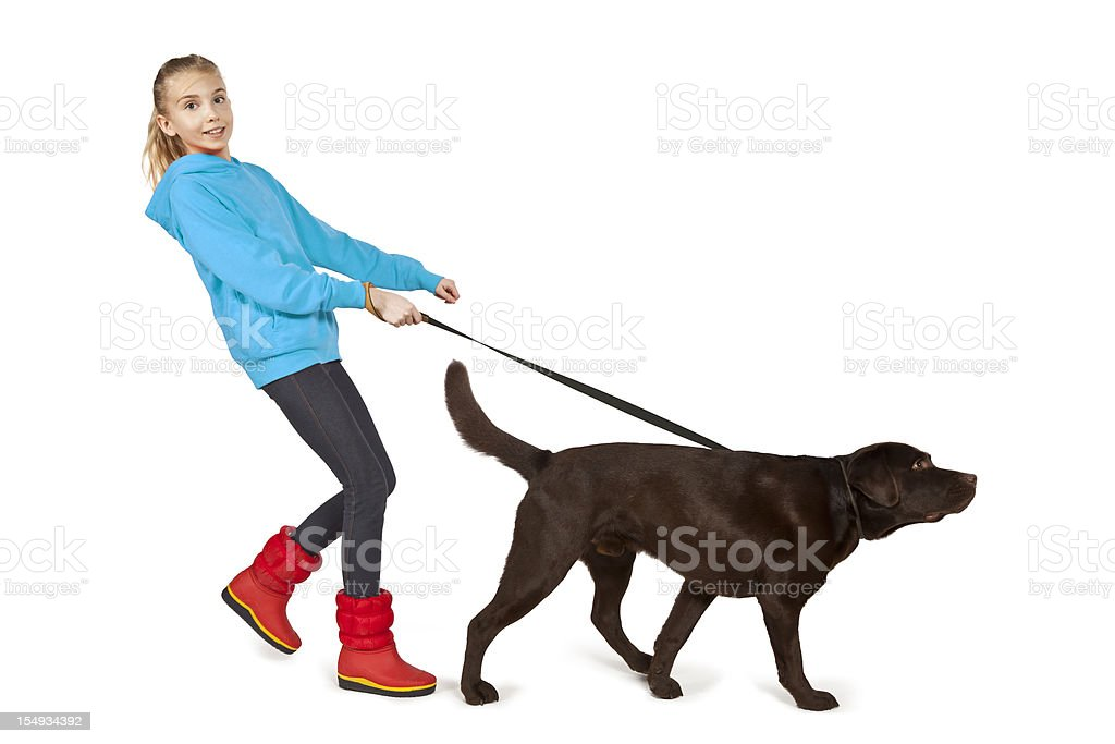 A girl walking a big brown dog on a leash stock photo