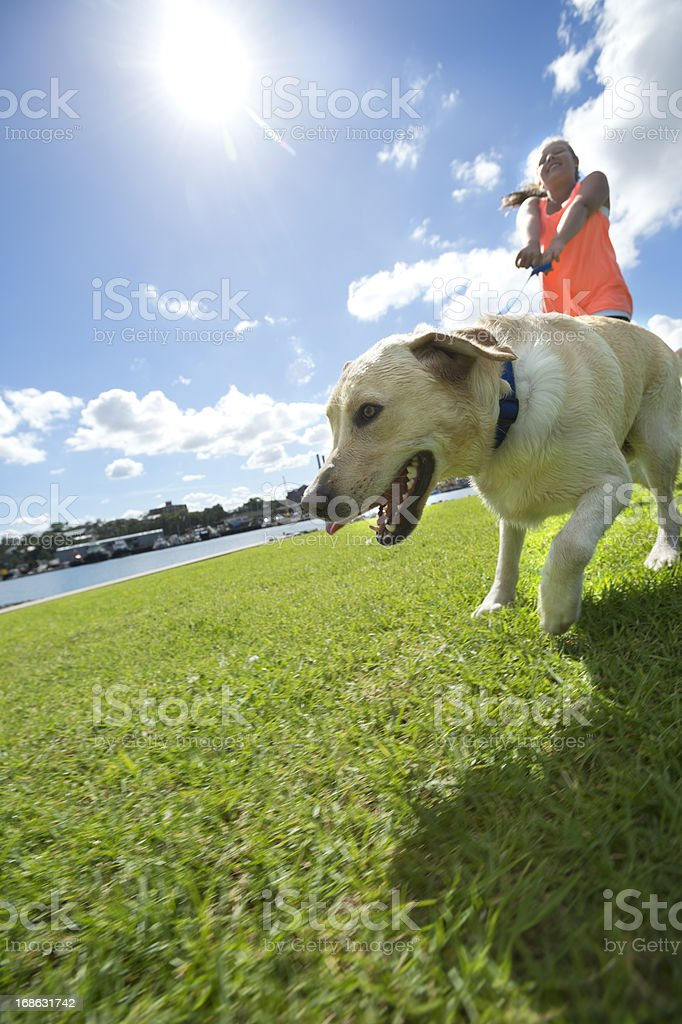 Girl walking a dog in the park royalty-free stock photo