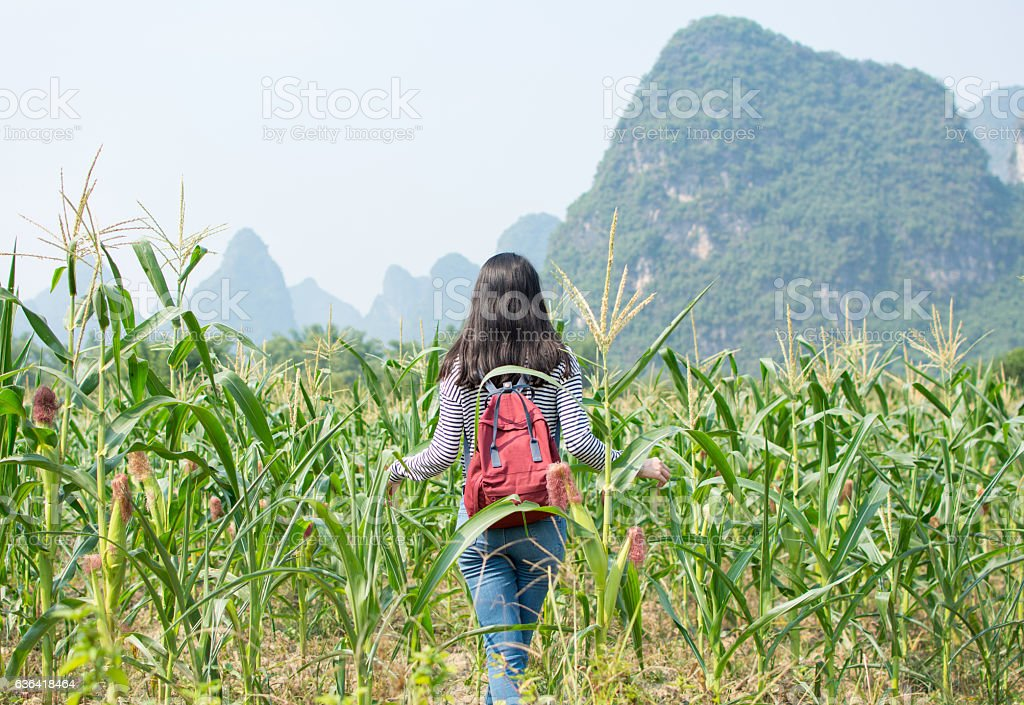 Girl walking in corn field stock photo
