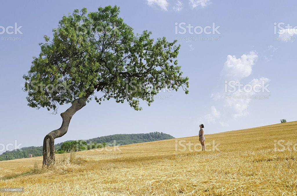 Girl watching a big tree in summer royalty-free stock photo