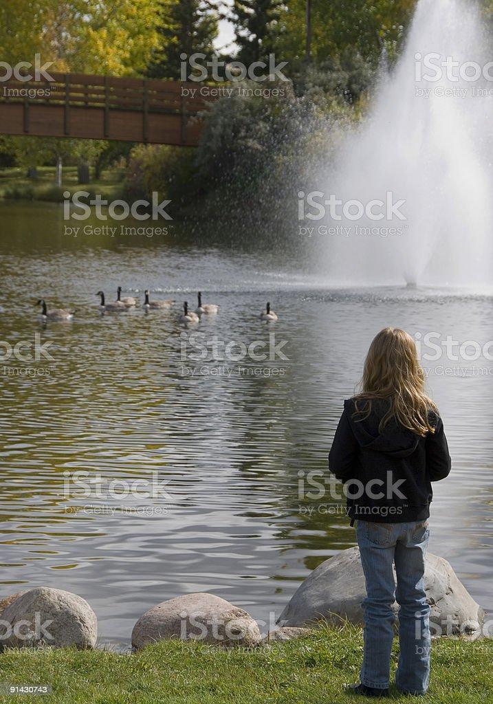 Girl watching geese royalty-free stock photo