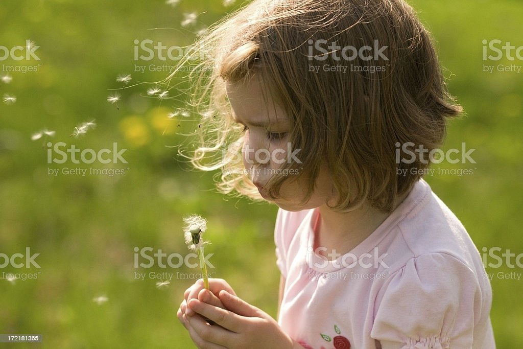 Girl with a Dandelion royalty-free stock photo