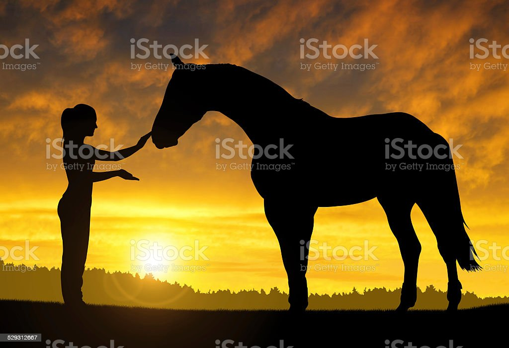girl with a horse stock photo