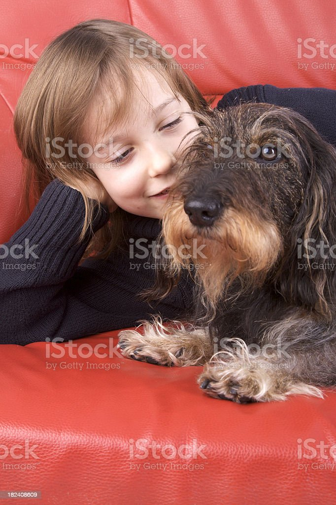 Girl with a wire-haired dachshund stock photo