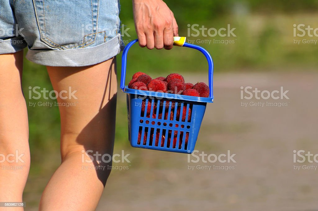 Girl with basket of arbutus stock photo
