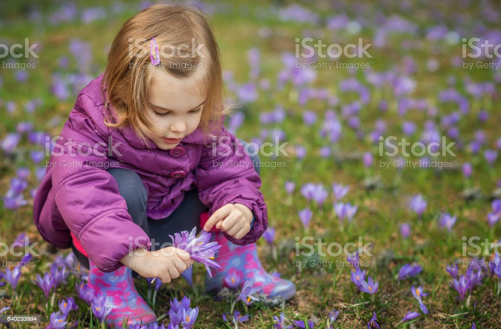 Girl with crocuses stock photo