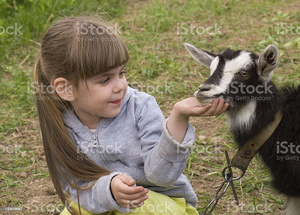 Girl with goat stock photo