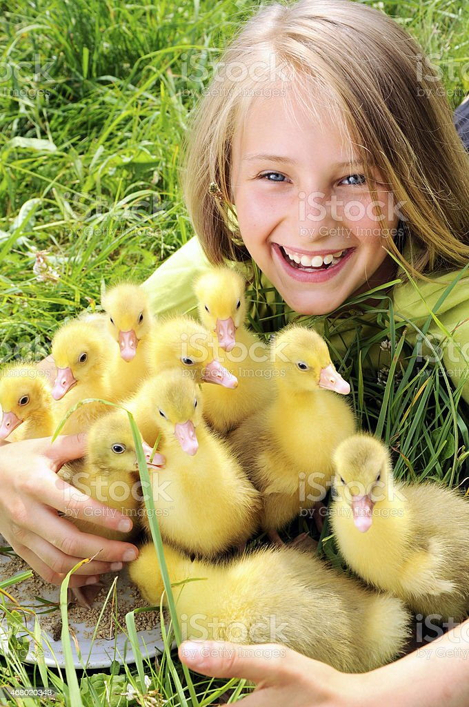 girl with goslings royalty-free stock photo