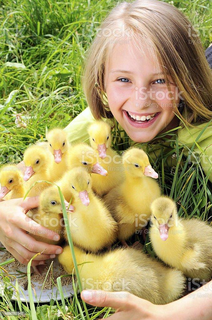 girl with goslings stock photo