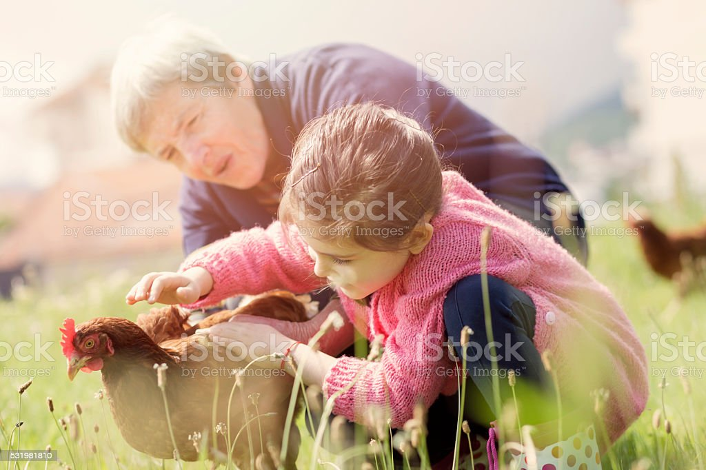 Girl with Her Grandmother Stroked Hen stock photo