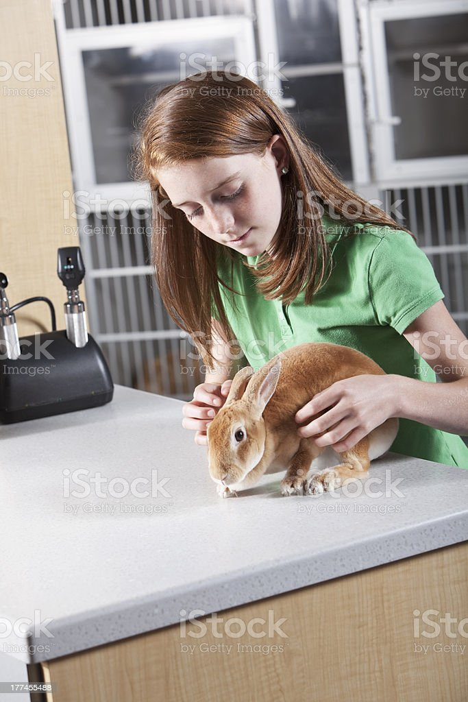 Girl with pet rabbit at vet clinic royalty-free stock photo