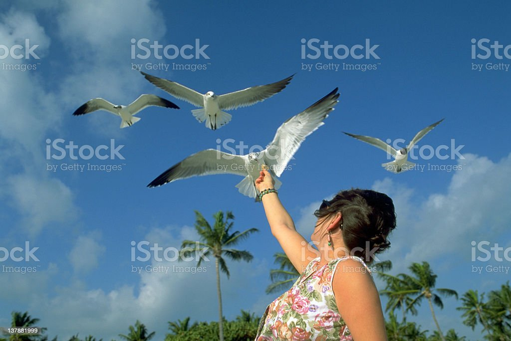 Girl with seagulls royalty-free stock photo