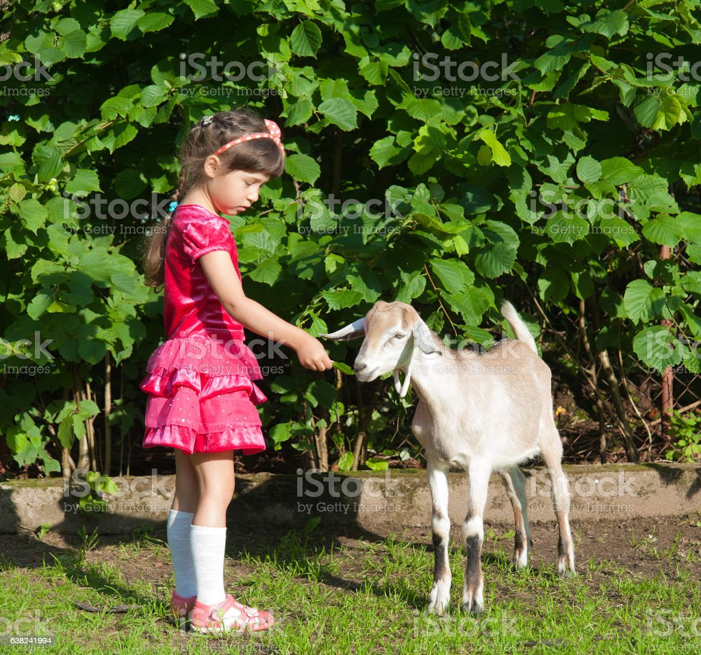 girl with the goat in the summer stock photo