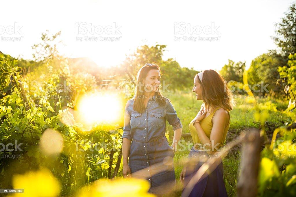 Girlfriends talking in the vineyard stock photo