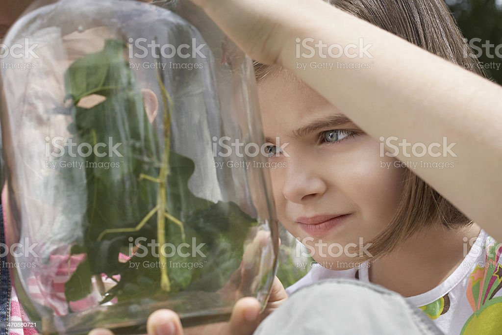 Girls Examining Stick Insects In Jar stock photo