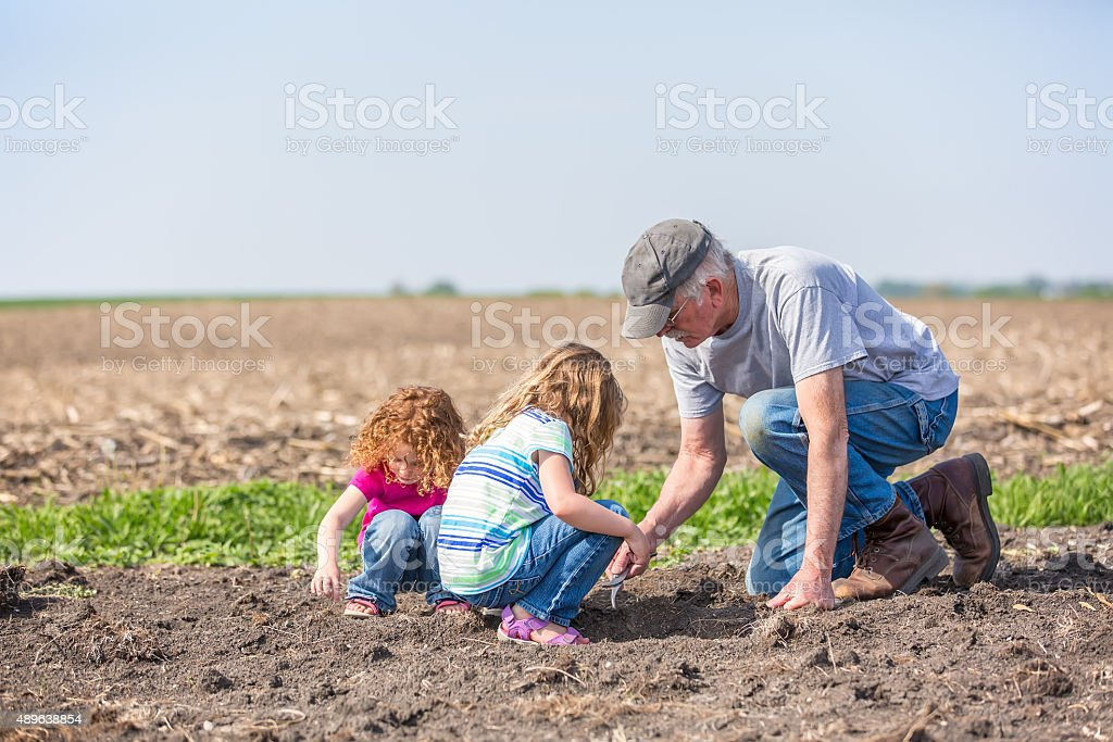 Girls & Grandpa Checking Field for Growing Soybeans stock photo