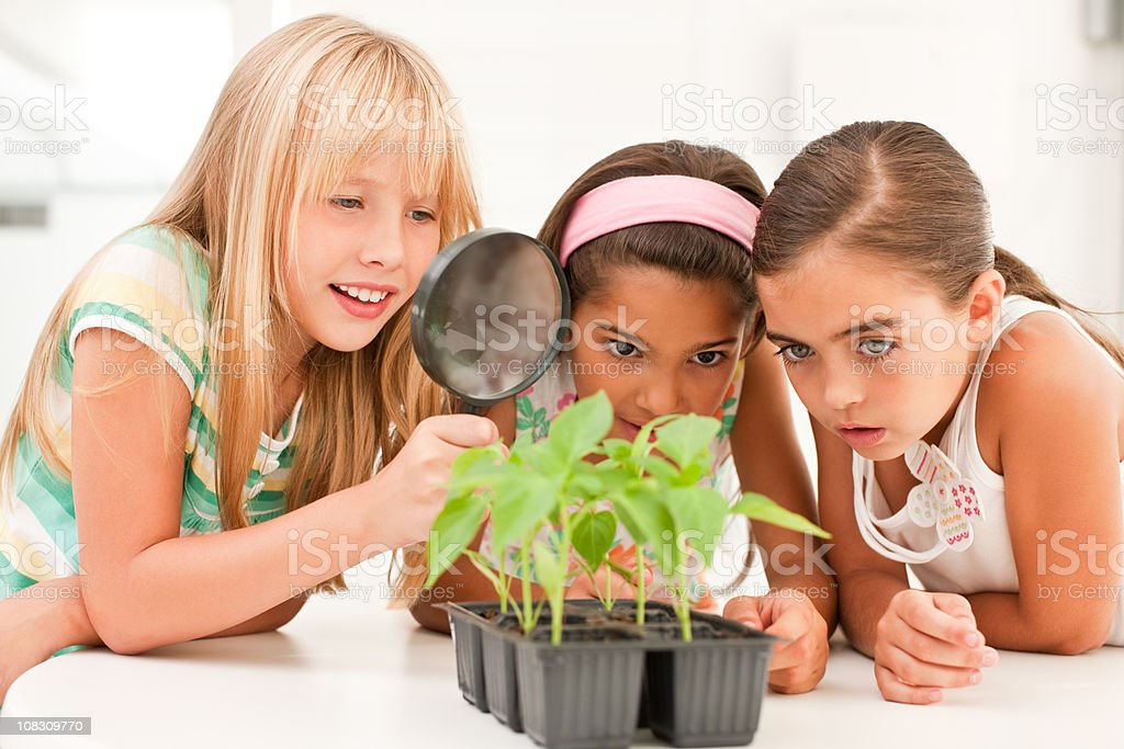 Girls looking at a plant with magnifying glass royalty-free stock photo