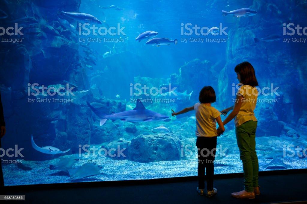 Girls looking at the fish in a big aquarium stock photo