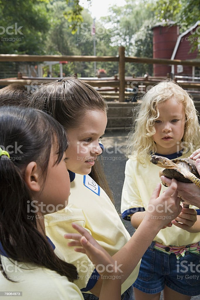 Girls looking at tortoise royalty-free stock photo