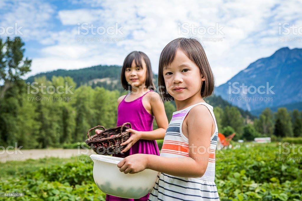 Girls picking strawberries at farm. stock photo