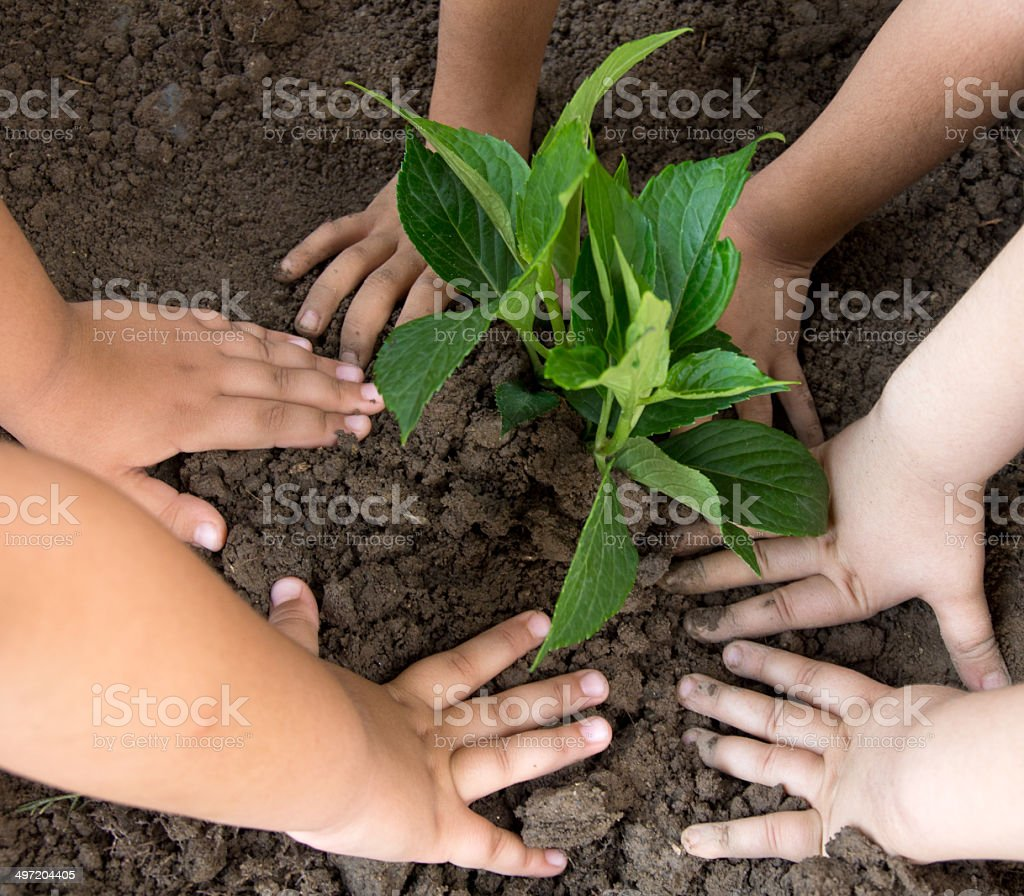 Girls planted a sapling stock photo