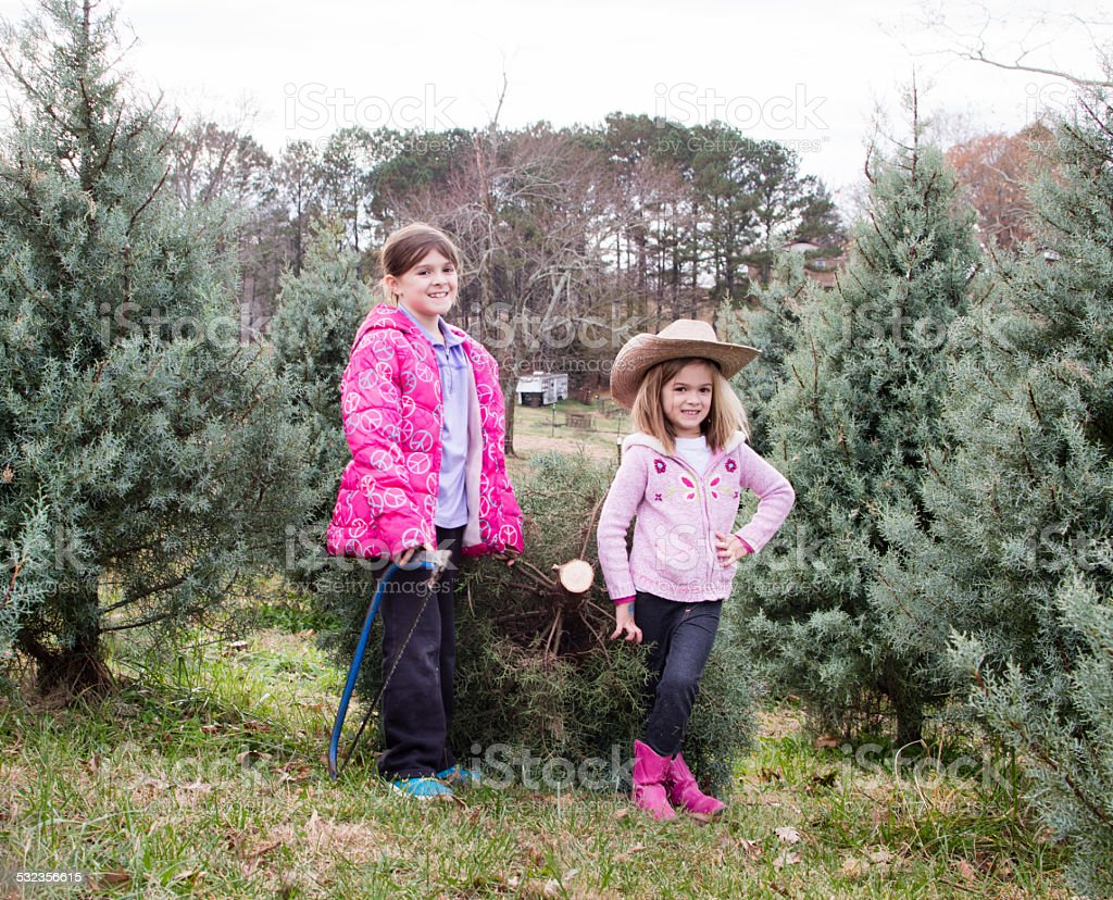 Girls with freshly cut Christmas tree stock photo