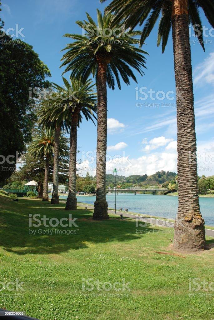 Gisborne Treeline stock photo