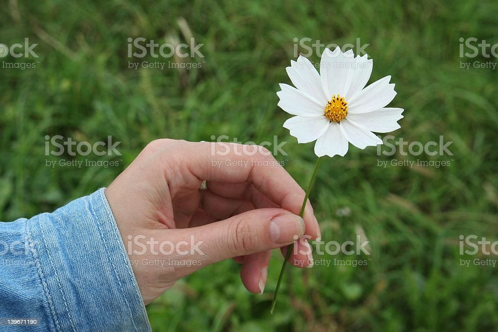 give a white flower royalty-free stock photo